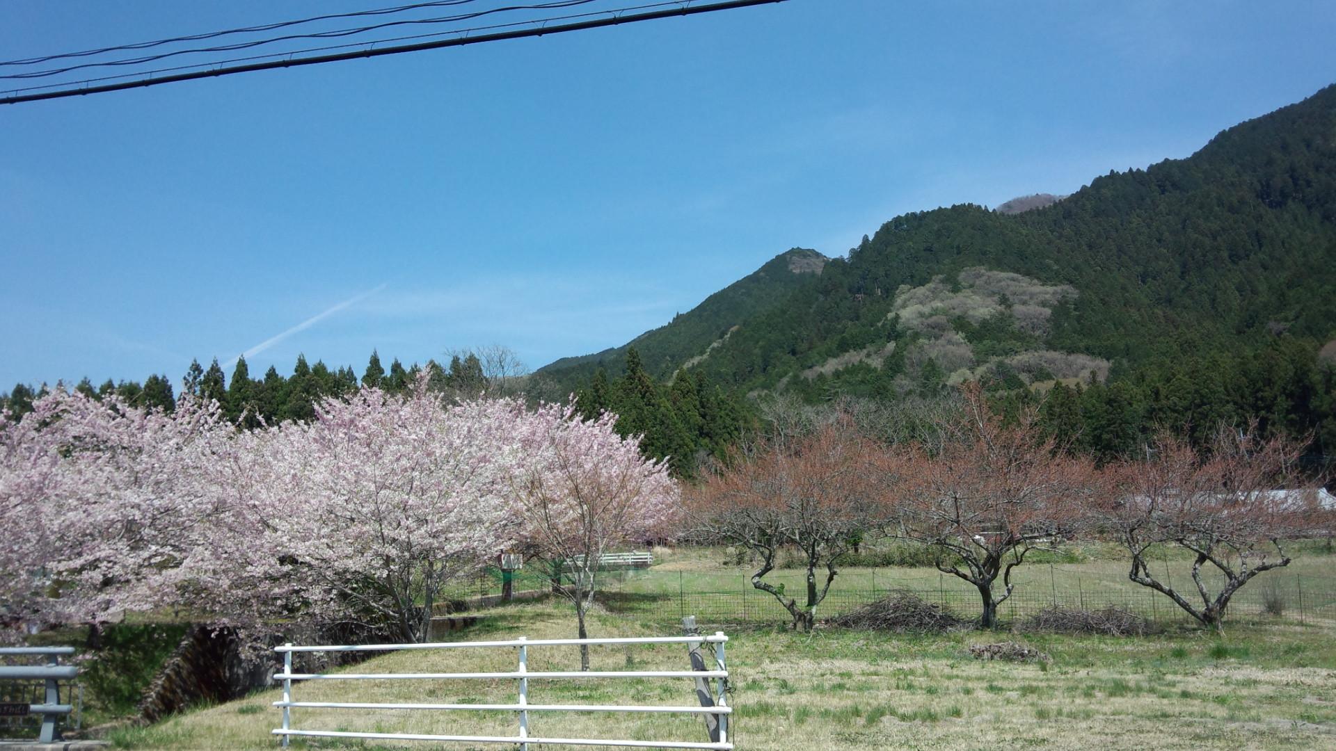 鹿沼はまだ花盛り♪